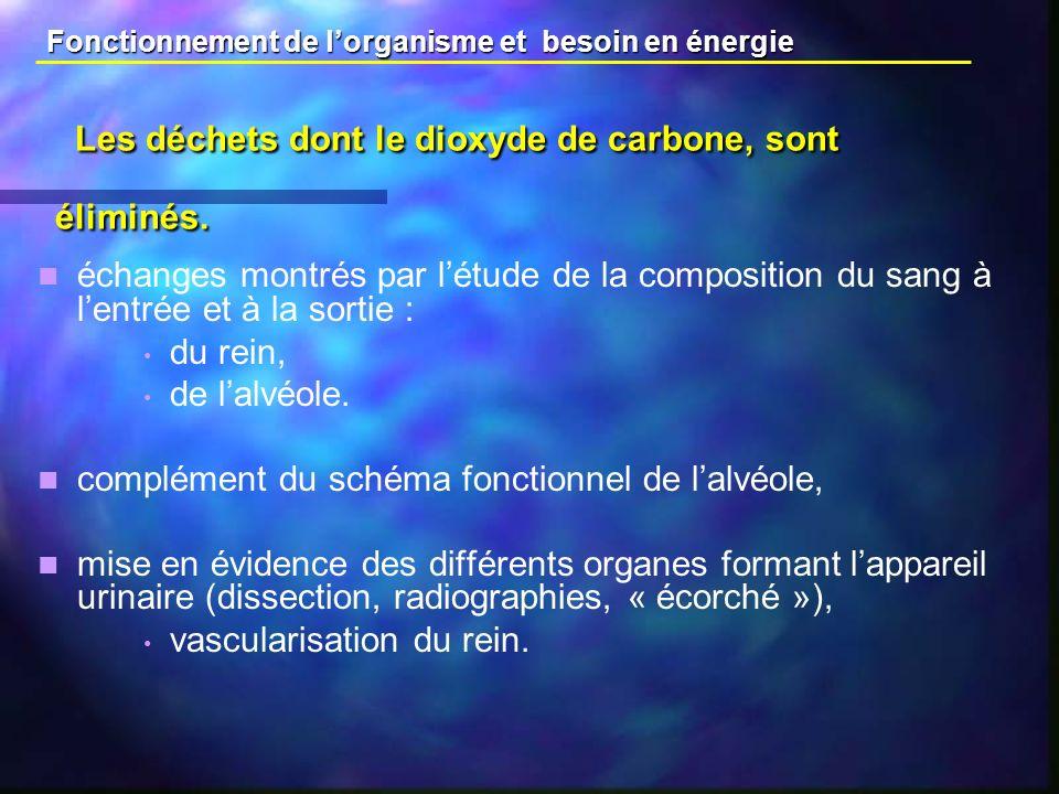 Les déchets dont le dioxyde de carbone, sont éliminés.