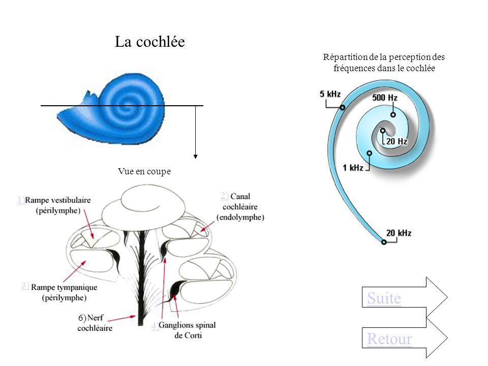 La chaîne dosselets de loreille moyenne Retour Les osselets aux nombres de 3 s'articulent mécaniquement pour transmettre le son depuis le tympan jusqu