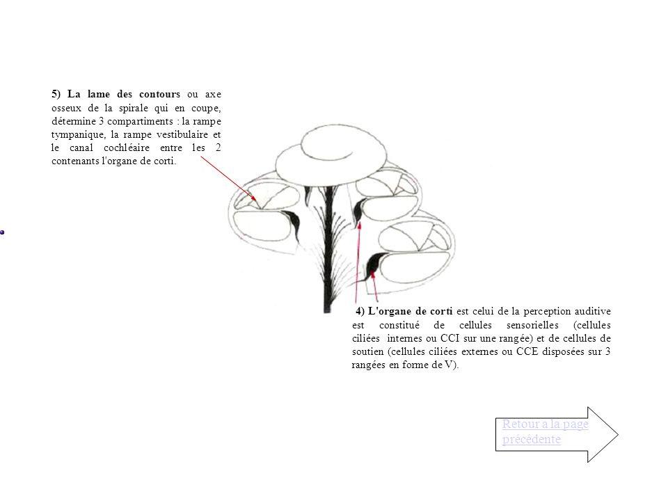 La cochlée (cochlea = limaçon) est une cavité osseuse spiralée et conique deux fois plus petite quun pois cassé. Elle naît de la partie antérieure du