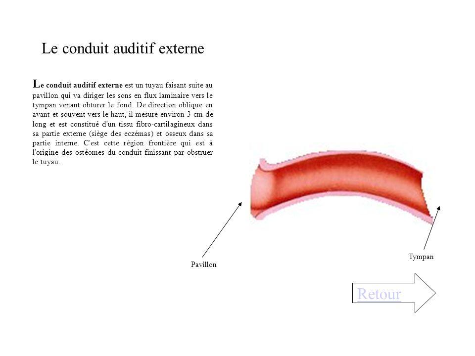 4) L'organe de corti est celui de la perception auditive est constitué de cellules sensorielles (cellules ciliées internes ou CCI sur une rangée) et d