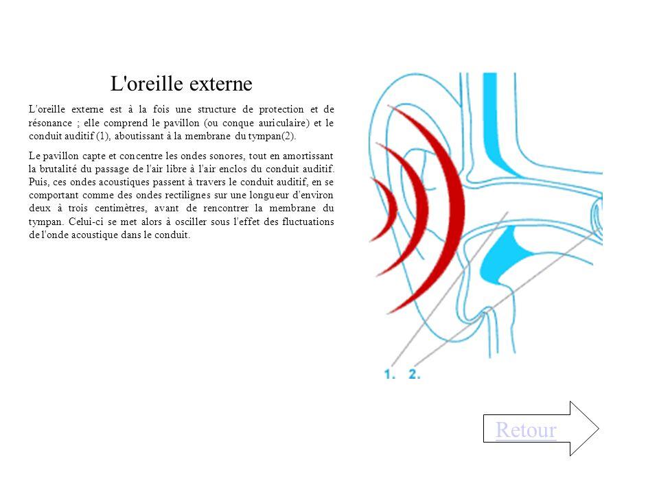 L oreille externe L oreille externe est à la fois une structure de protection et de résonance ; elle comprend le pavillon (ou conque auriculaire) et le conduit auditif (1), aboutissant à la membrane du tympan(2).