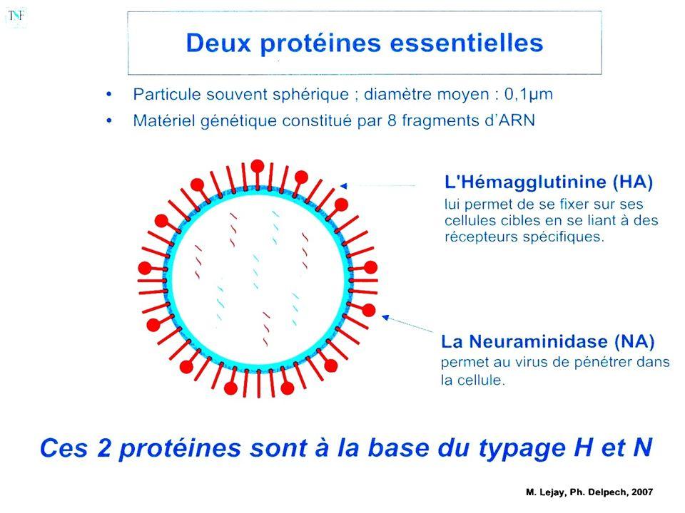 2009Médecine prévention, Paris Diderot Epidémiologie des pandémies En moyenne 3 pandémies (2-4) par siècle - répétition environ tous les 10 à 40 ans -XXème siècle : 1918 (grippe « espagnole ») 1957 (grippe « asiatique ») 1968 (grippe « de Hong-Kong ») 1977 (grippe « russe ») Evolution dune pandémie: lexemple de la grippe espagnole Evolution sur 2 ans Trois phases successives de 10-12 semaines chacune: Phase 1: mars-juin 1918 Phase 2: fin août 1918-mars 1919 Phase 3: mars 1919-juin 1920 Recombinaison dun segment de gène HA entre un gène aviaire et un gène porcin Environ 40 millions de morts dans le monde.