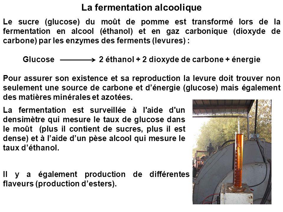 Le sucre (glucose) du moût de pomme est transformé lors de la fermentation en alcool (éthanol) et en gaz carbonique (dioxyde de carbone) par les enzym