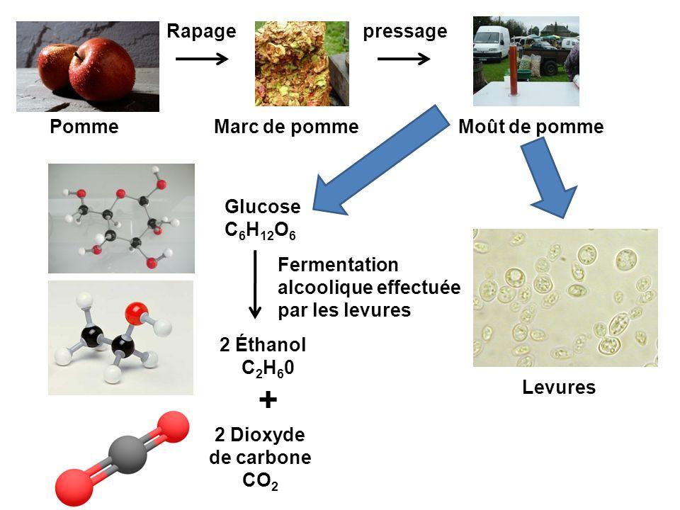 Marc de pommeMoût de pomme Glucose C 6 H 12 O 6 pressageRapage 2 Dioxyde de carbone CO 2 2 Éthanol C 2 H 6 0 + Fermentation alcoolique effectuée par l