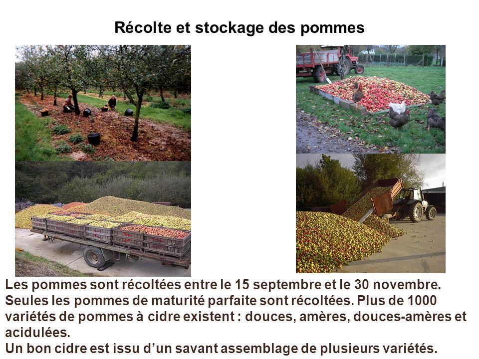Récolte et stockage des pommes Les pommes sont récoltées entre le 15 septembre et le 30 novembre. Seules les pommes de maturité parfaite sont récoltée