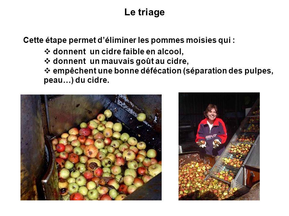 Le triage Cette étape permet déliminer les pommes moisies qui : donnent un cidre faible en alcool, donnent un mauvais goût au cidre, empêchent une bon