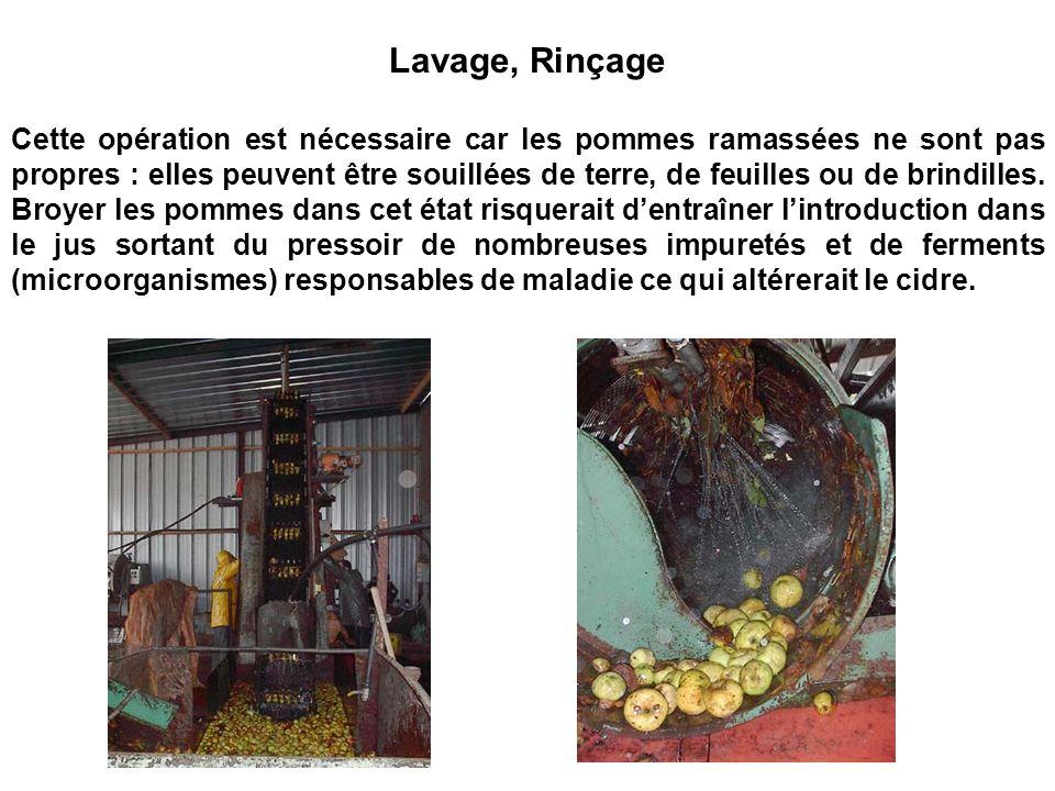 Lavage, Rinçage Cette opération est nécessaire car les pommes ramassées ne sont pas propres : elles peuvent être souillées de terre, de feuilles ou de