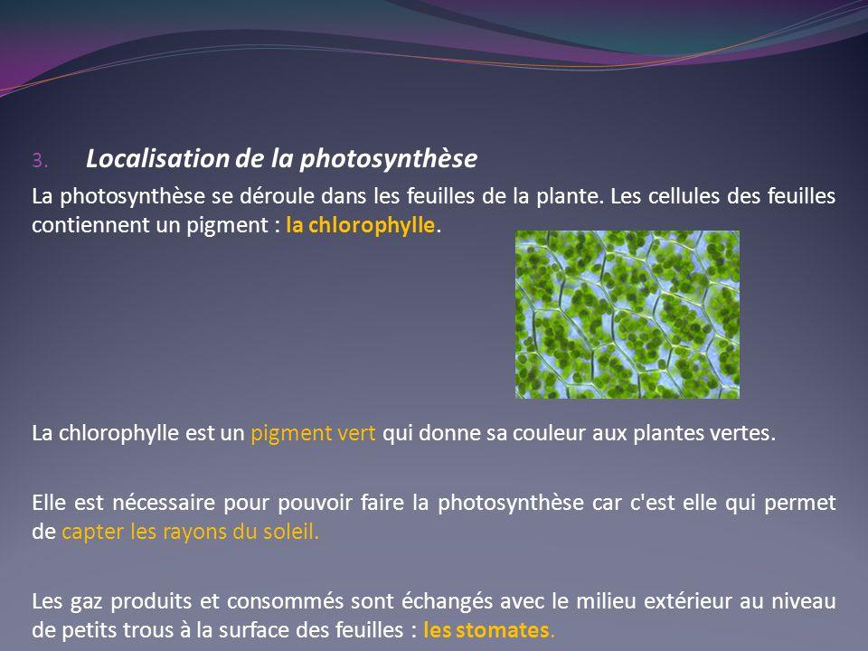 3. Localisation de la photosynthèse La photosynthèse se déroule dans les feuilles de la plante. Les cellules des feuilles contiennent un pigment : la