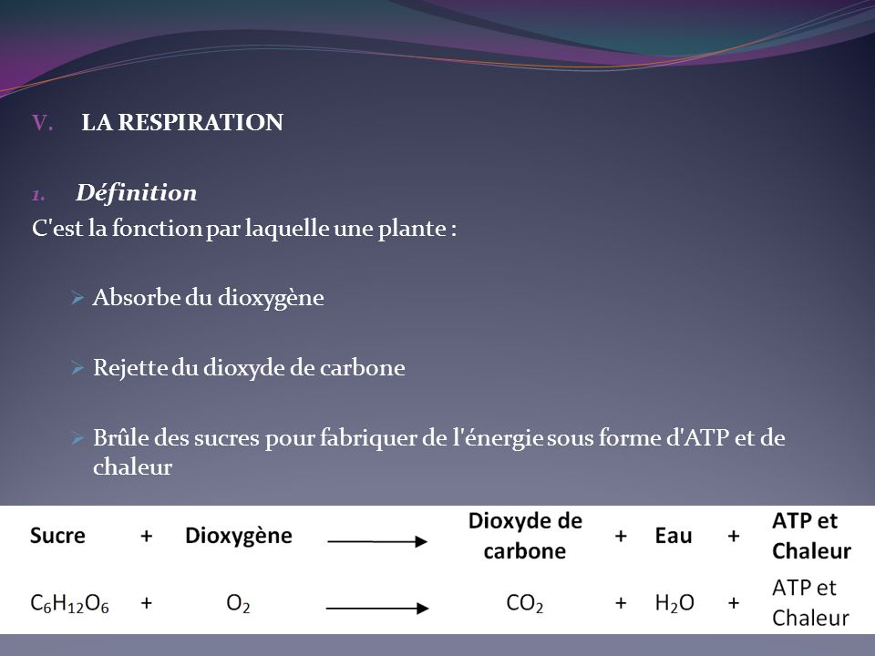 V. LA RESPIRATION 1. Définition C'est la fonction par laquelle une plante : Absorbe du dioxygène Rejette du dioxyde de carbone Brûle des sucres pour f