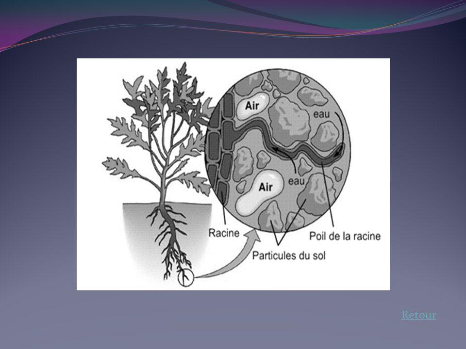 2.Les besoins de la plante La plante a besoin de sels minéraux pour grandir correctement.