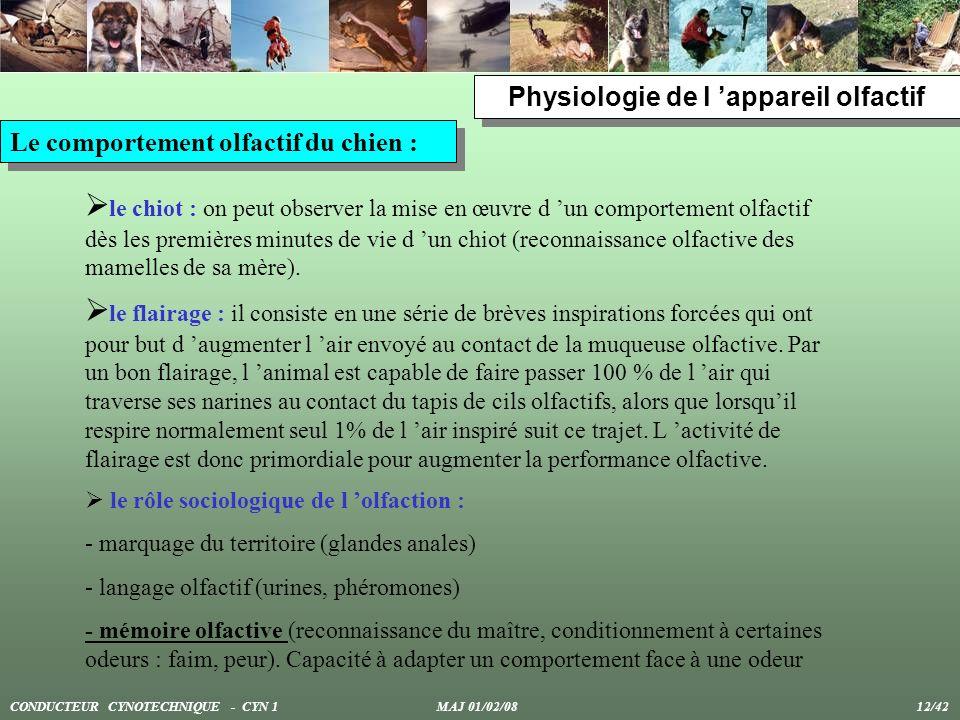 Physiologie de l appareil olfactif Le comportement olfactif du chien : le chiot : on peut observer la mise en œuvre d un comportement olfactif dès les