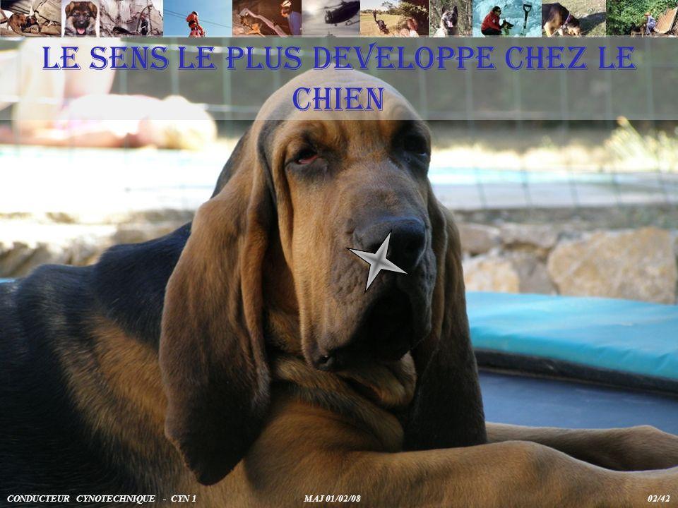 LE SENS LE PLUS DEVELOPPE CHEZ LE CHIEN CONDUCTEUR CYNOTECHNIQUE - CYN 1 MAJ 01/02/08 02/42