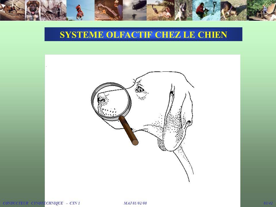 SYSTEME OLFACTIF CHEZ LE CHIEN CONDUCTEUR CYNOTECHNIQUE - CYN 1 MAJ 01/02/08 03/42