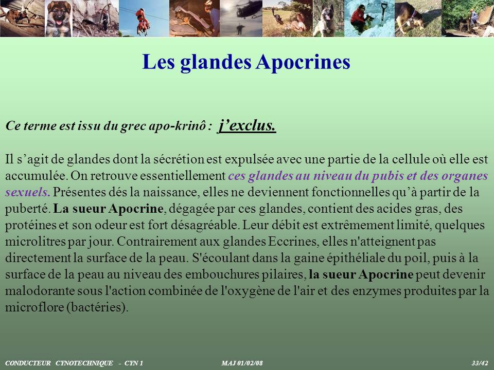 Les glandes Apocrines Ce terme est issu du grec apo-krinô : jexclus. Il sagit de glandes dont la sécrétion est expulsée avec une partie de la cellule