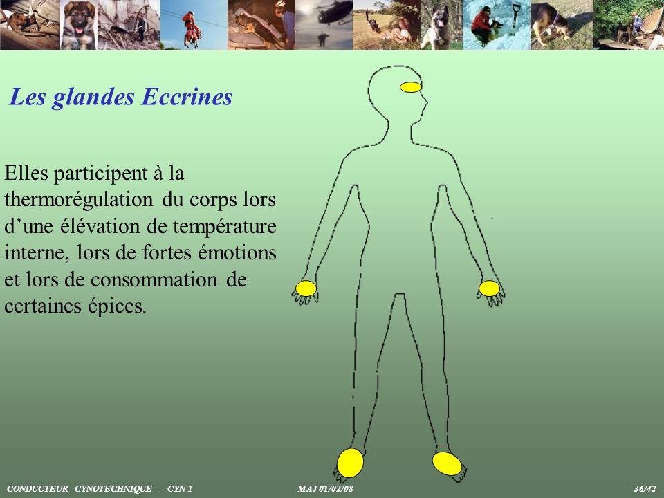 Elles participent à la thermorégulation du corps lors dune élévation de température interne, lors de fortes émotions et lors de consommation de certai