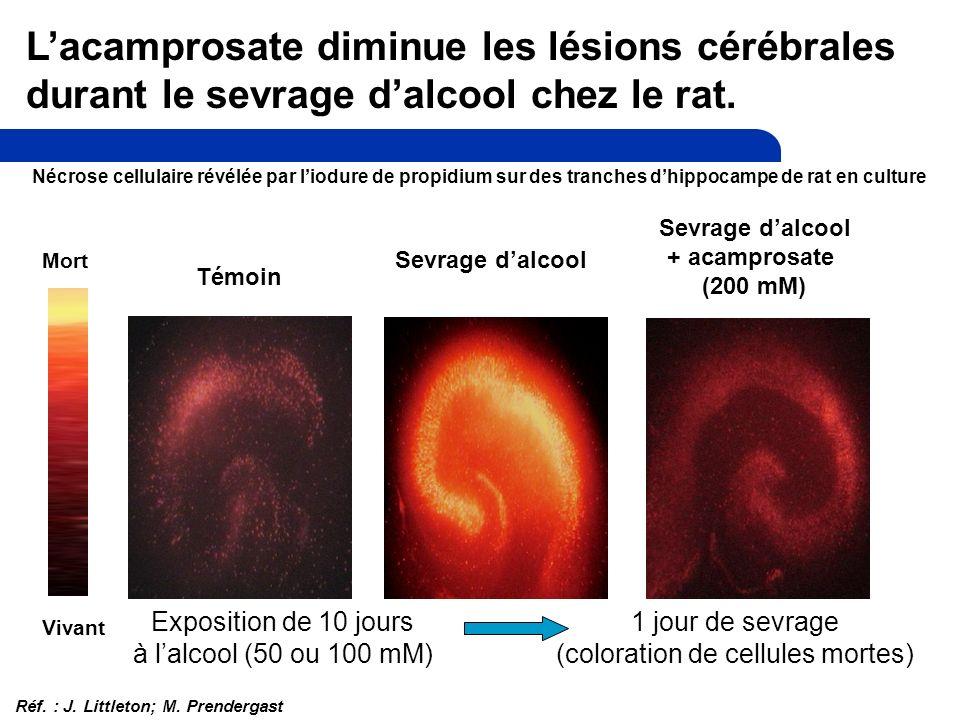 Mort Vivant Sevrage dalcool + acamprosate (200 mM) Témoin Sevrage dalcool Lacamprosate diminue les lésions cérébrales durant le sevrage dalcool chez le rat.