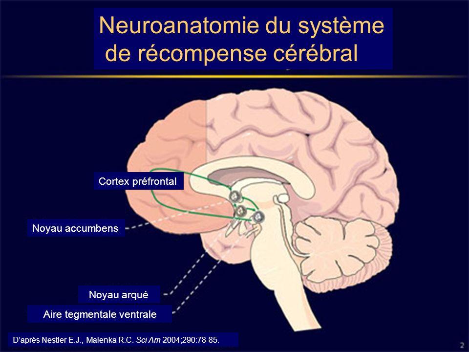 Neuroanatomie du système de récompense cérébral Noyau accumbens Cortex préfrontal Noyau arqué Aire tegmentale ventrale Daprès Nestler E.J., Malenka R.C.
