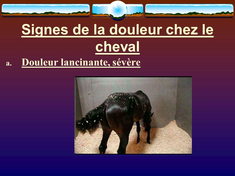 Signes de la douleur chez le cheval a. Douleur lancinante, sévère