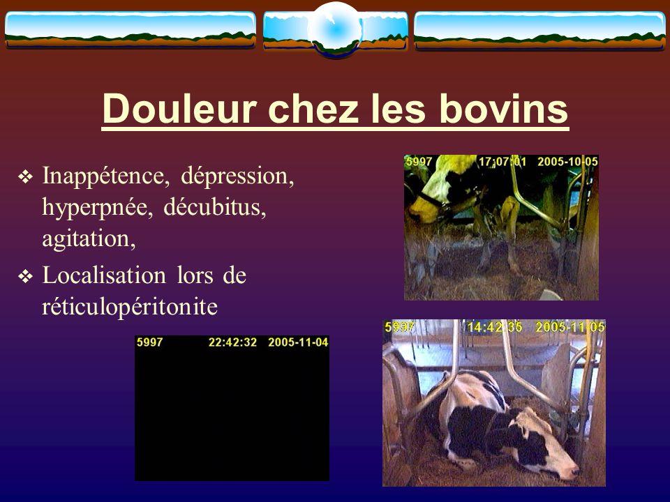 Douleur chez les bovins Inappétence, dépression, hyperpnée, décubitus, agitation, Localisation lors de réticulopéritonite