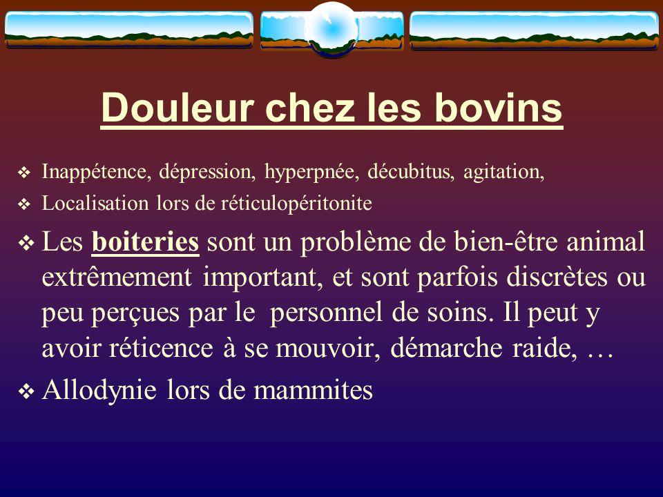 Douleur chez les bovins Inappétence, dépression, hyperpnée, décubitus, agitation, Localisation lors de réticulopéritonite Les boiteries sont un problè