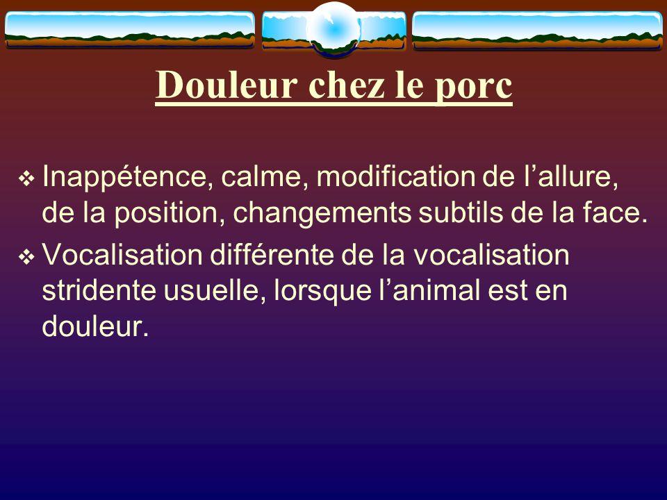 Douleur chez le porc Inappétence, calme, modification de lallure, de la position, changements subtils de la face. Vocalisation différente de la vocali