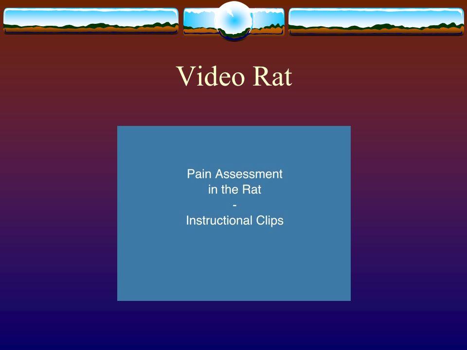 Video Rat