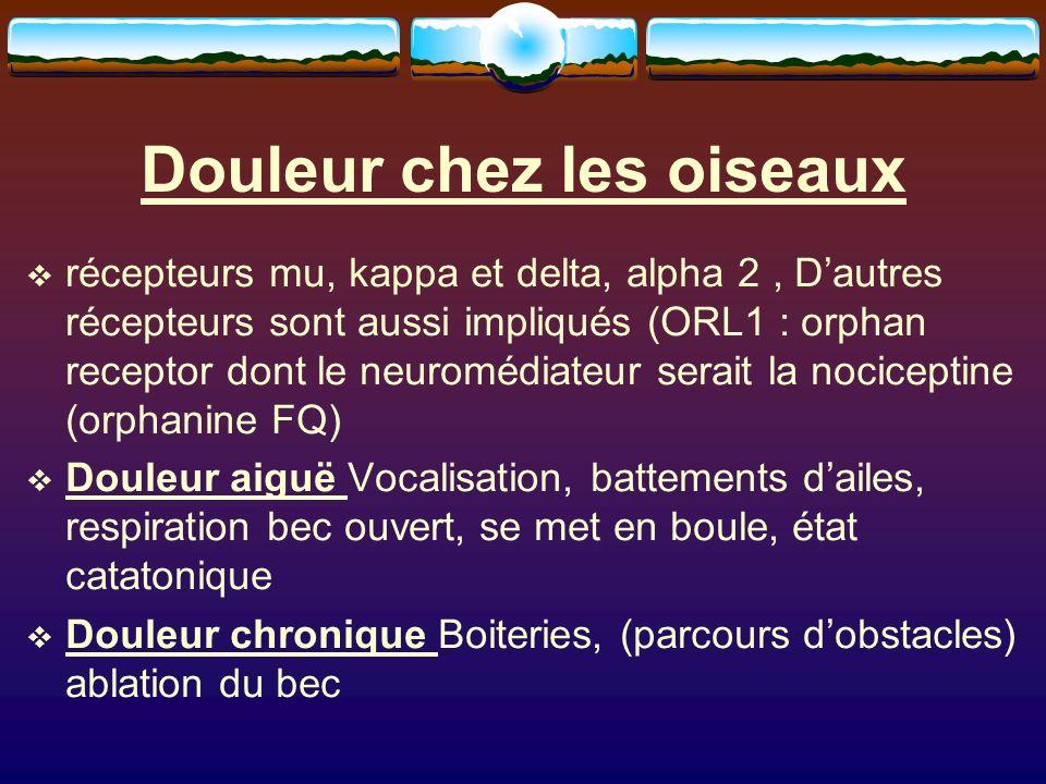 Douleur chez les oiseaux récepteurs mu, kappa et delta, alpha 2, Dautres récepteurs sont aussi impliqués (ORL1 : orphan receptor dont le neuromédiateur serait la nociceptine (orphanine FQ) Douleur aiguë Vocalisation, battements dailes, respiration bec ouvert, se met en boule, état catatonique Douleur chronique Boiteries, (parcours dobstacles) ablation du bec