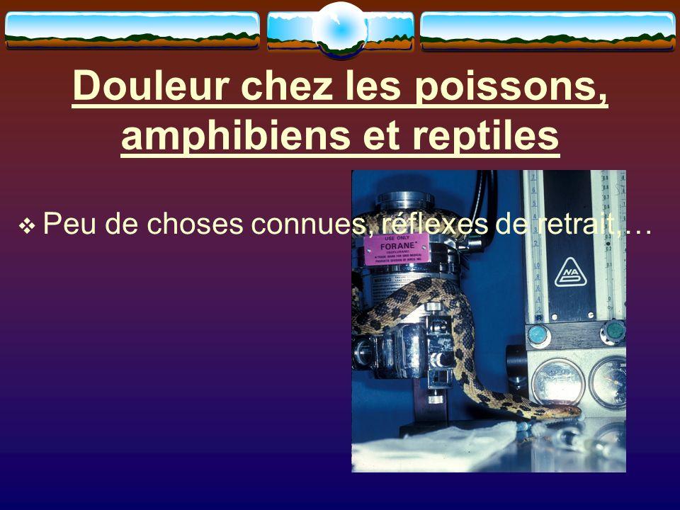 Douleur chez les poissons, amphibiens et reptiles Peu de choses connues, réflexes de retrait,…