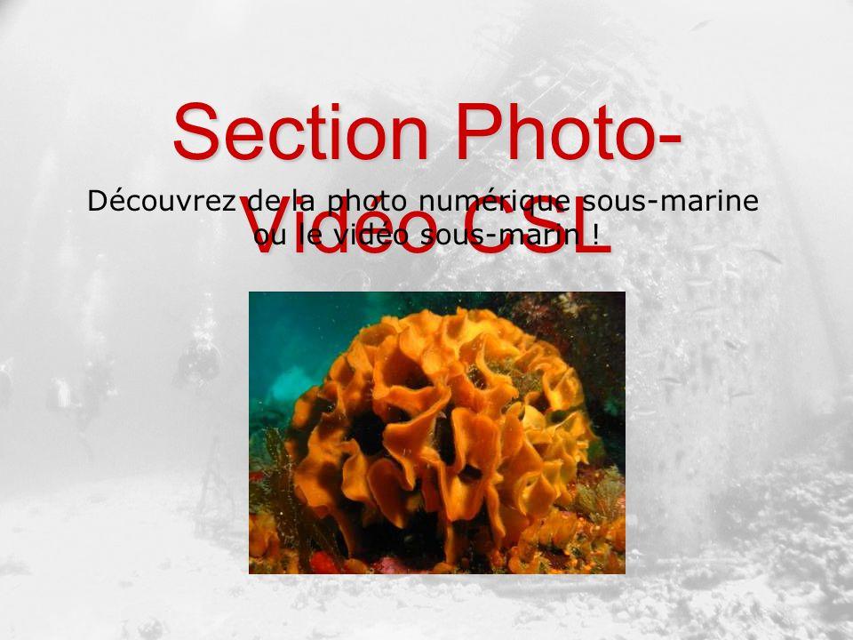 Section Photo- Vidéo CSL Découvrez de la photo numérique sous-marine ou le vidéo sous-marin !
