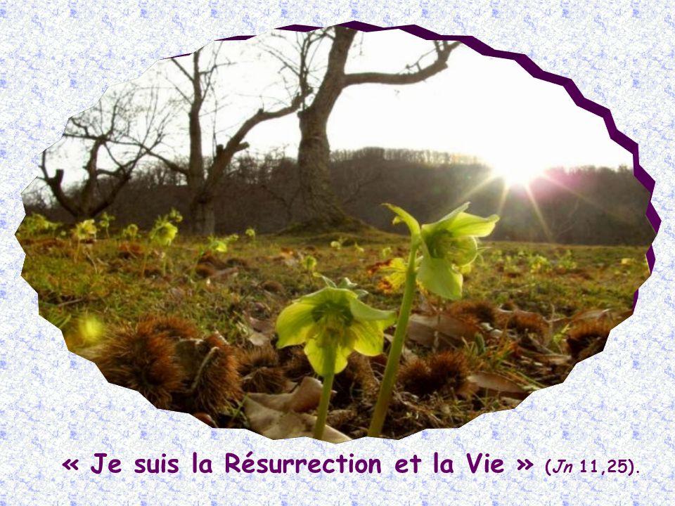 Et cette Vie divine, qui existe déjà en toi, se manifestera pleinement au dernier jour, lorsque tu participeras, de tout ton être, à la résurrection.