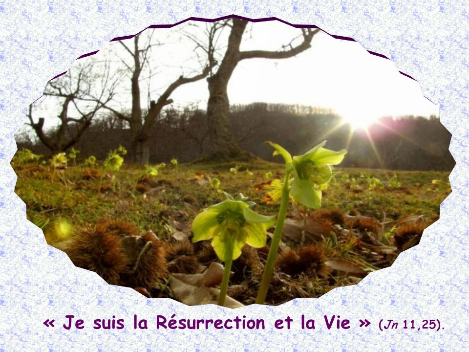 Maintenant déjà, il est pour tous les croyants cette Vie divine, ineffable et éternelle, qui ne mourra jamais.