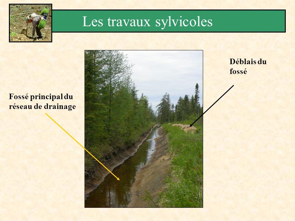 Fossé principal du réseau de drainage Déblais du fossé