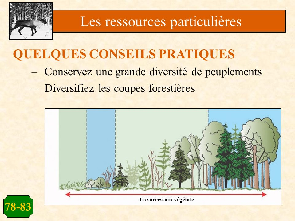 78-83 QUELQUES CONSEILS PRATIQUES –Conservez une grande diversité de peuplements –Diversifiez les coupes forestières Les ressources particulières La s