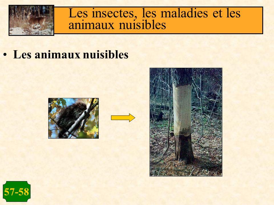 57-58 Les animaux nuisibles Les insectes, les maladies et les animaux nuisibles