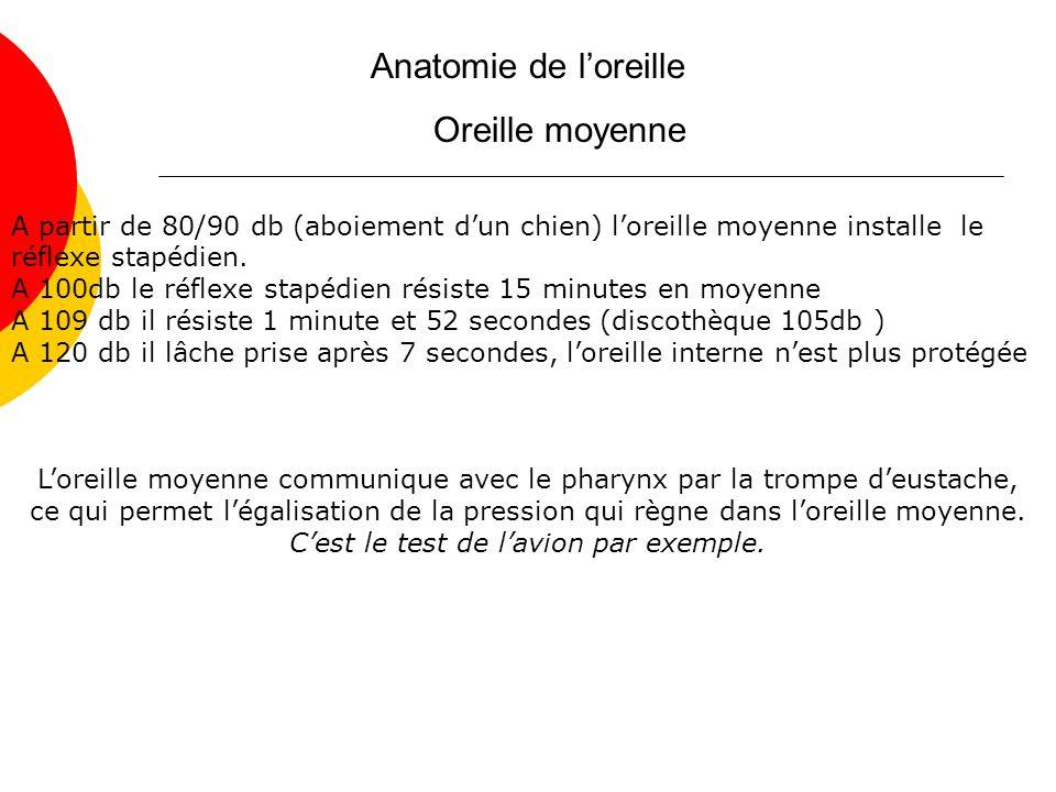 Anatomie de loreille Oreille moyenne A partir de 80/90 db (aboiement dun chien) loreille moyenne installe le réflexe stapédien.