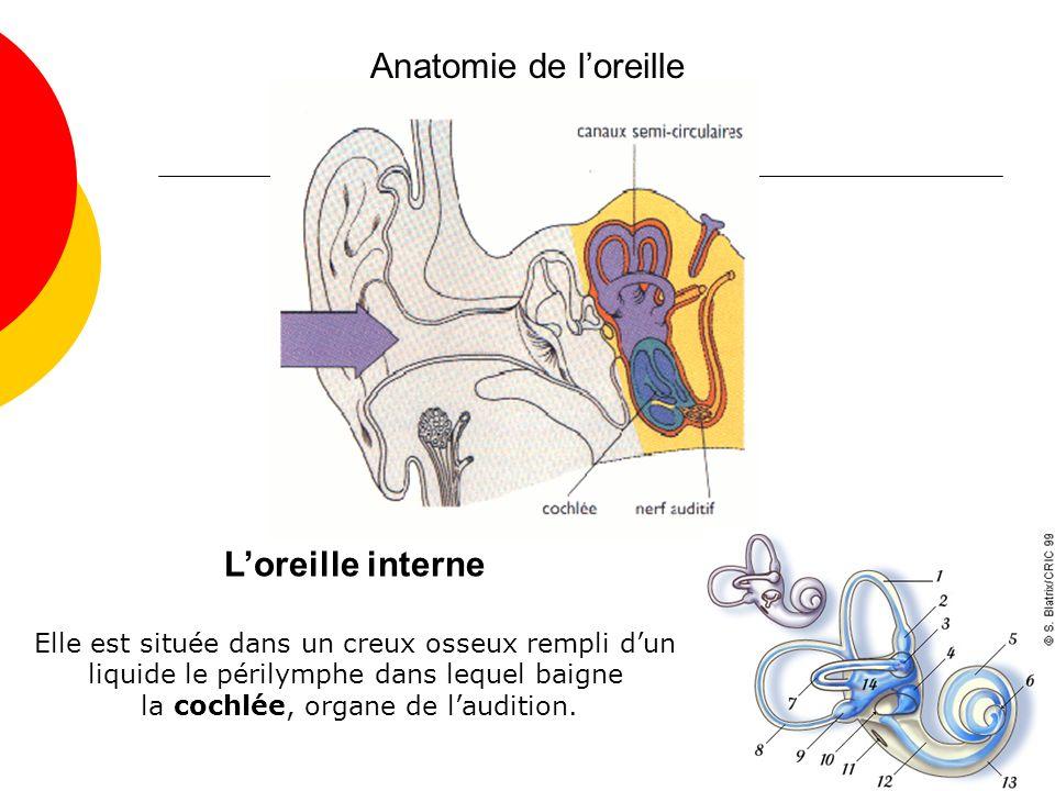 Anatomie de loreille Loreille interne Elle est située dans un creux osseux rempli dun liquide le périlymphe dans lequel baigne la cochlée, organe de laudition.