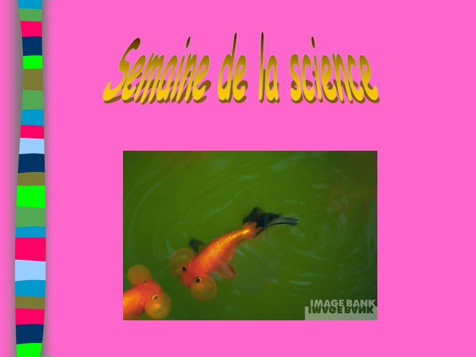 Interprétation Physique/Chimie Interprétation Biologique => MATIERES ORGANIQUES FORTE PENTE => BONS INDICES BIOLOGIQUES OXYGENATION =