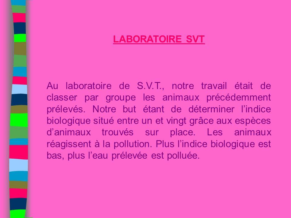 LABORATOIRE SVT Au laboratoire de S.V.T., notre travail était de classer par groupe les animaux précédemment prélevés. Notre but étant de déterminer l
