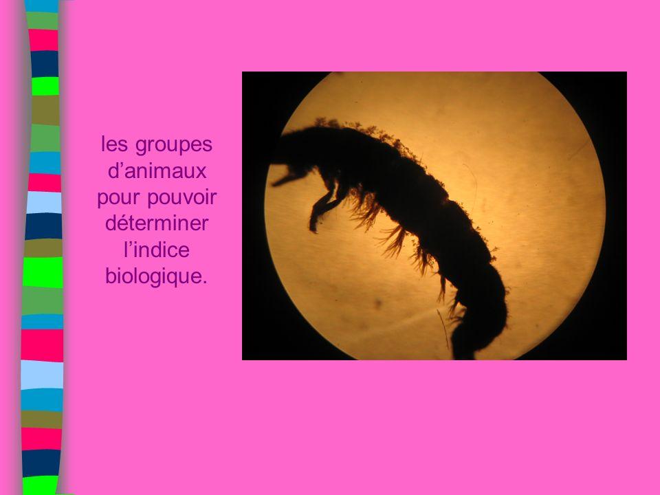 les groupes danimaux pour pouvoir déterminer lindice biologique.