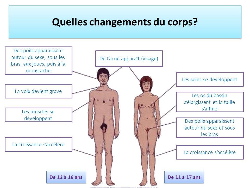 Quelles changements du corps? De lacné apparaît (visage) Des poils apparaissent autour du sexe, sous les bras, aux joues, puis à la moustache La voix