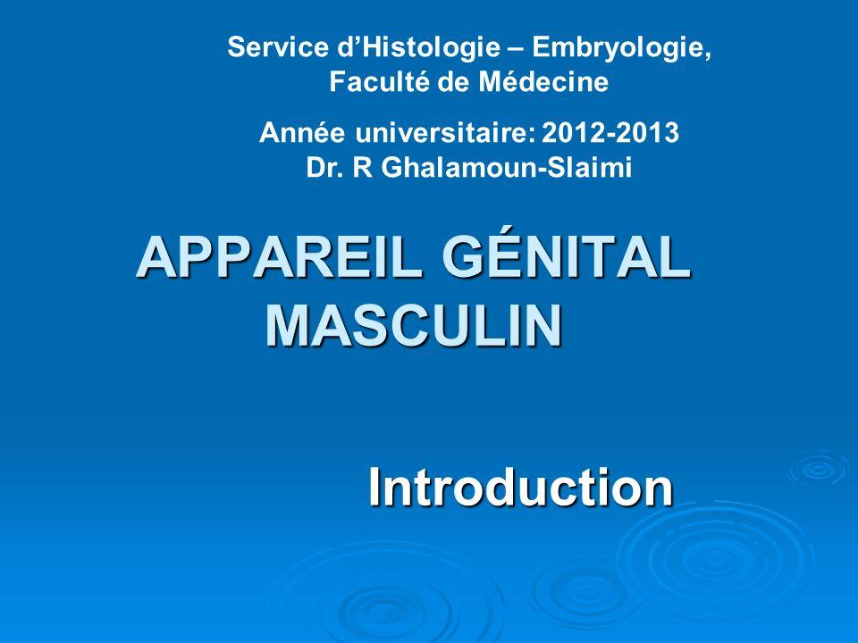 APPAREIL GÉNITAL MASCULIN Introduction Introduction Service dHistologie – Embryologie, Faculté de Médecine Année universitaire: 2012-2013 Dr.
