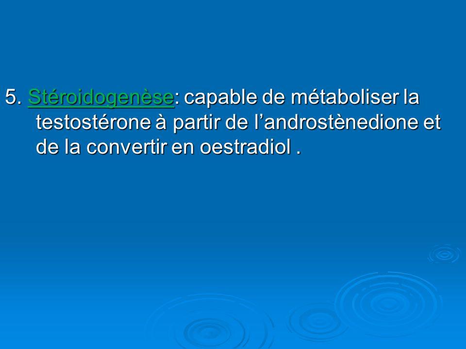 5. Stéroidogenèse: capable de métaboliser la testostérone à partir de landrostènedione et de la convertir en oestradiol.
