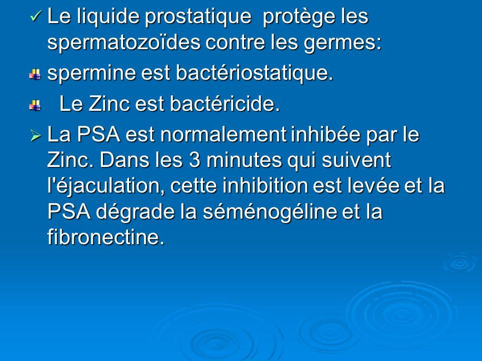 Le liquide prostatique protège les spermatozoïdes contre les germes: Le liquide prostatique protège les spermatozoïdes contre les germes: spermine est bactériostatique.