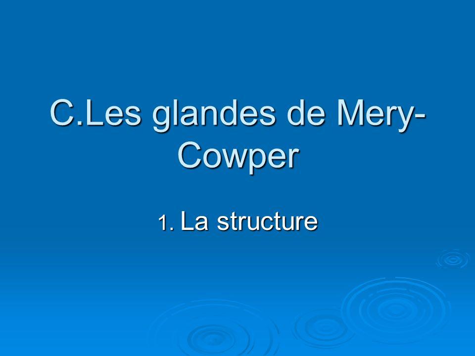 C.Les glandes de Mery- Cowper 1. La structure