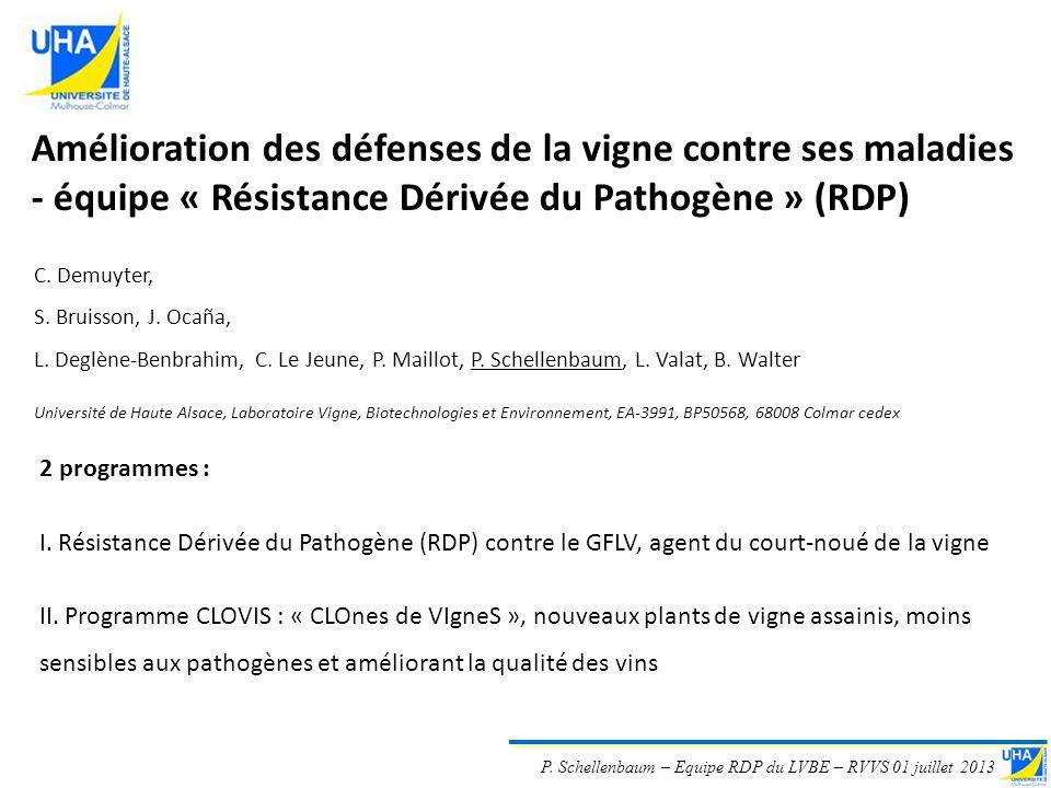 P. Schellenbaum – Equipe RDP du LVBE – RVVS 01 juillet 2013 Amélioration des défenses de la vigne contre ses maladies - équipe « Résistance Dérivée du