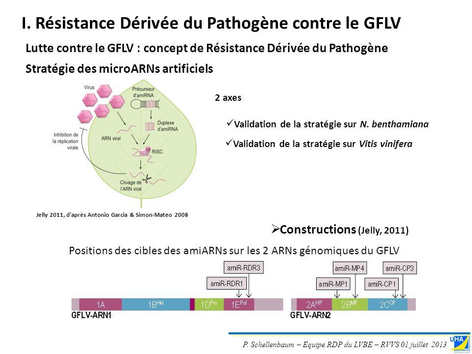 P. Schellenbaum – Equipe RDP du LVBE – RVVS 01 juillet 2013 Lutte contre le GFLV : concept de Résistance Dérivée du Pathogène Stratégie des microARNs