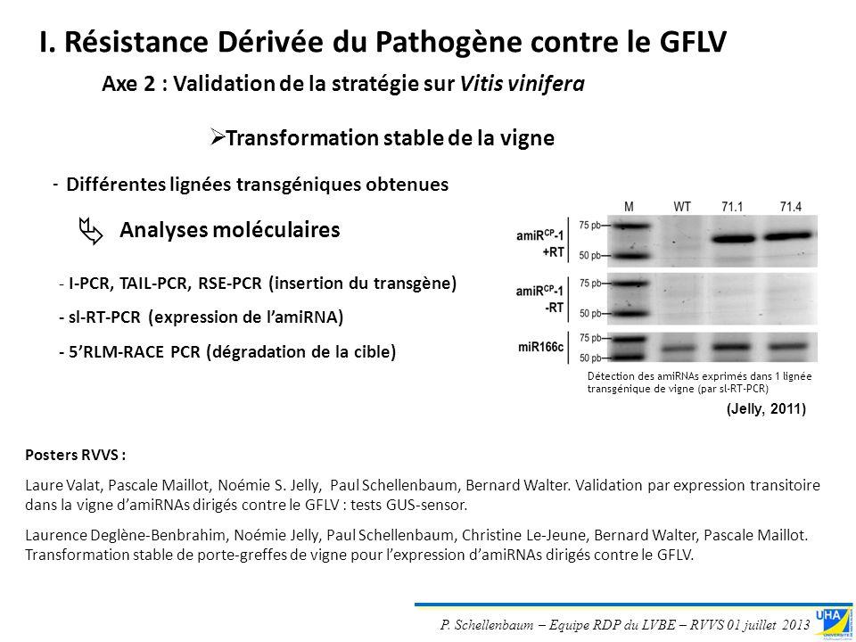 P. Schellenbaum – Equipe RDP du LVBE – RVVS 01 juillet 2013 Transformation stable de la vigne Axe 2 : Validation de la stratégie sur Vitis vinifera -