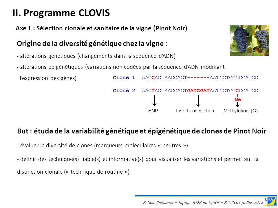 P. Schellenbaum – Equipe RDP du LVBE – RVVS 01 juillet 2013 Origine de la diversité génétique chez la vigne : - altérations génétiques (changements da