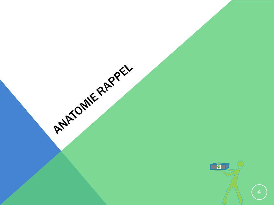 ANATOMIE RAPPEL 4