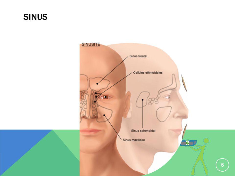 SINUS 6